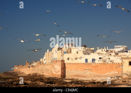 Gulls swirl through the sky above the medina/old town at Essaouira on the Atlantic coast of Morocco, north Africa - Stock Photo