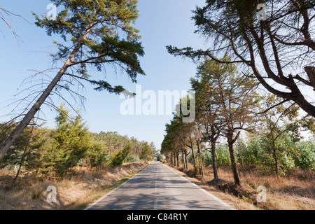 Road in Portugal - Stock Photo