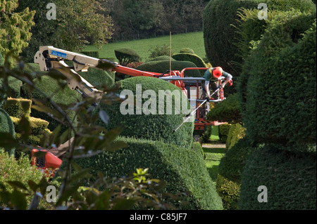Levens Hall, Cumbria, UK. Using a cherrypicker lift to clip the yews in the famous topiary garden. - Stock Photo