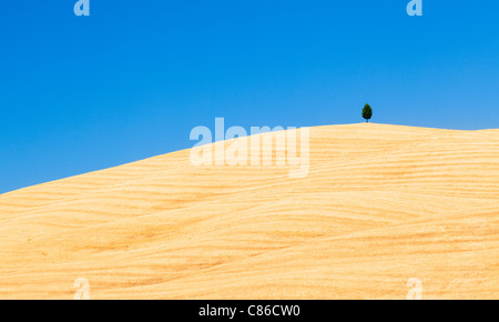 Tuscany - Single tree on hillside near Pienza - Stock Photo