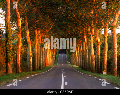 Tree lined country road near Auch in Gers Region of France - Stock Photo