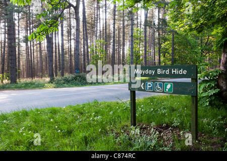 Sign for Mayday Bird Hide in Thetford Forest.  See C874WX for right-pointing sign. - Stock Photo