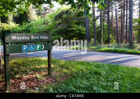 Sign for Mayday Bird Hide in Thetford Forest.  See C874RC for left-pointing sign. - Stock Photo