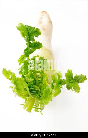 Daikon radish on white - Stock Photo