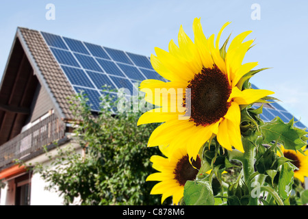 Germany, Cologne,  Sunflowers in front of house with solar panels - Stock Photo