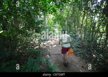 Trekking in the Taman Negara's rainforest, Malaysia - Stock Photo