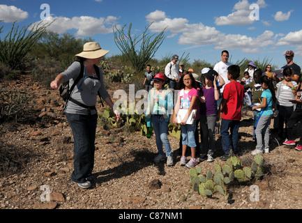 Elementary school students study the Sonoran Desert in Tucson, Arizona, USA. - Stock Photo