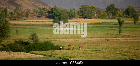 Agricultural workers in fields below Aravalli mountain range at Nimaj, Rajasthan, Northern India - Stock Photo