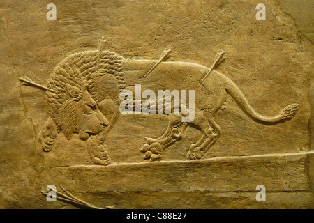 Assyrian relief of the Royal lion hunt of King Ashurbanipal seen at the British Museum in London, England, UK. - Stock Photo