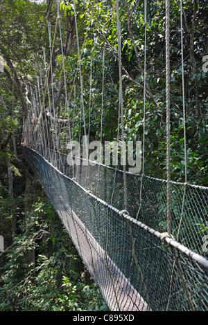 Canopy walk in the Taman Negara's rainforest, Malaysia - Stock Photo