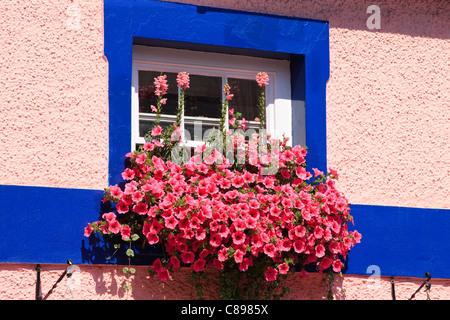 Colourful window box Fishguard Pembrokeshire Wales - Stock Photo