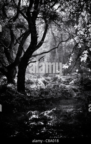 sunlight through trees black - photo #35