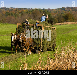 Amish farmer and young sons gathering hay with a team of horses, Mohawk Valley, New York State - Stock Photo