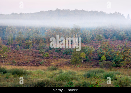 A beautiful misty Autumnal morning on Chobham Common National Nature Reserve. - Stock Photo