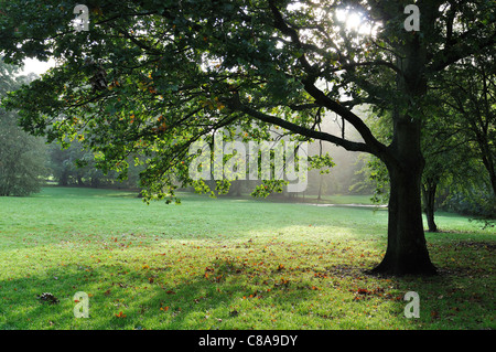 Early morning autumn sunlight coming through oak tree, in parkland - Stock Photo