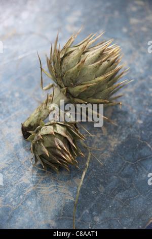 Wild artichokes - Stock Photo