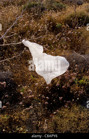 Plastic bag caught on a bush and blowing in the wind - Stock Photo