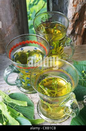 lime blossom tea outdoors - Stock Photo