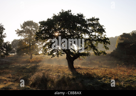 Early Morning Mist Rising From the Woodland Floor in Autumn UK - Stock Photo