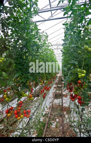 Intensive crop farming
