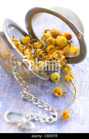 Lime blossom in a tea infuser - Stock Photo