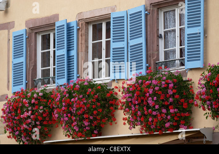 Traditional window flowerboxes and wooden shutters at Eguisheim, Alsatian Wine Road, Haut Rhin, Alsace, France - Stock Photo