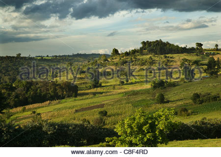 An evening view of farmland and forest on the Mau Escarpment in Kenya. - Stock Photo