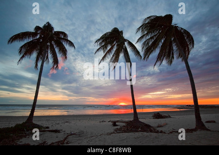 Sunset and palm trees on Playa Guiones beach, Nosara, Nicoya Peninsula, Guanacaste Province, Costa Rica, Central - Stock Photo