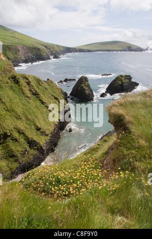 View from Slea Head Drive near Dunquin, Dingle Peninsula, County Kerry, Munster, Republic of Ireland - Stock Photo