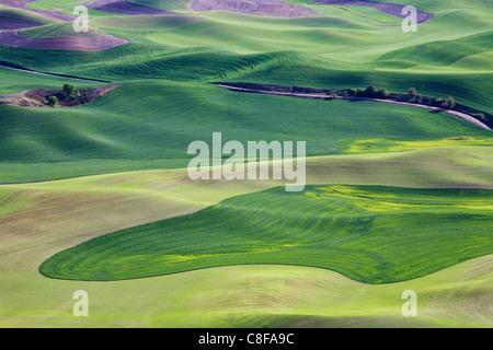 Spring in the Palouse, from Steptoe Butte, Washington State, United States of America - Stock Photo