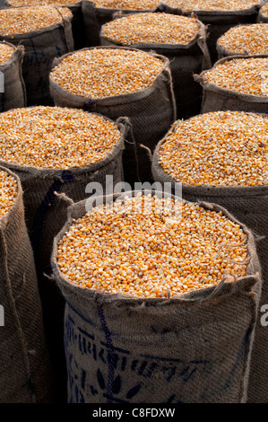 Dried Maize / Corn kernels bagged up in hessian sacks in India - Stock Photo