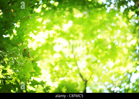Abstract blurred background. Sun's rays shining through the lush greens. - Stock Photo