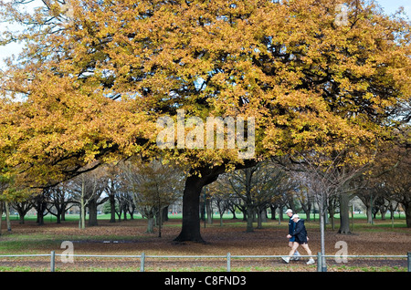 Park in fall color, New Zealand - Stock Photo
