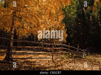 Autumn Leaves Falling - Stock Photo
