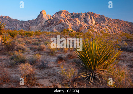 Mojave National Preserve, California, United States of America - Stock Photo