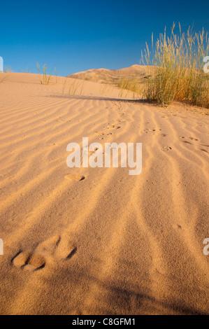 Kelso Dunes, Mojave National Preserve, California, United States of America - Stock Photo