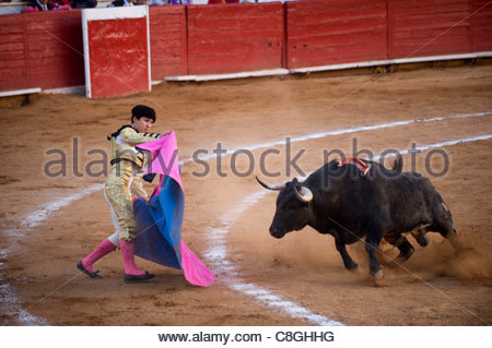 At a bullfight in Mexico City, a bull charges a Matador. - Stock Photo