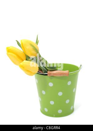 Tulips in the bucket - Stock Photo