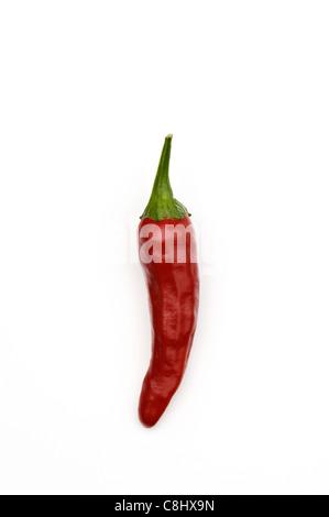 Santaka Hot Asian Chile Pepper - Stock Photo