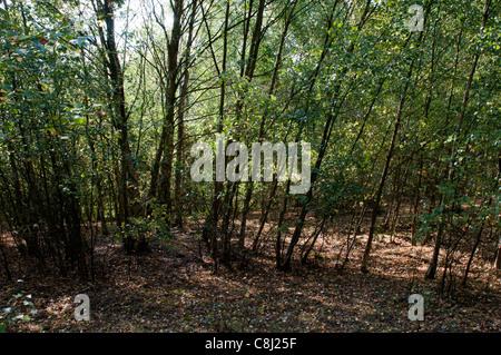 Pooley Country Park, Warwickshire, UK - Stock Photo