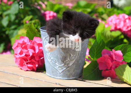 3 weeks, flower, flowers, garden, house, home, Animal, domestic animal, pet, young, cat, jug, kitten, vase, outdoors, - Stock Photo