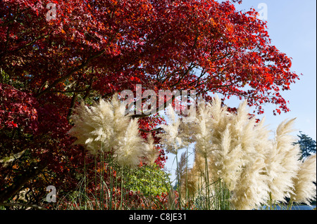 Autumn colours from many rare trees in Sheffield Park Gardens. - Stock Photo