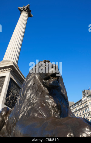 Lion statue at base of Nelson's column; Trafalgar Sq;London; England - Stock Photo