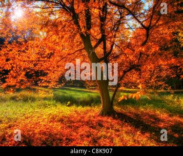 DE - BAVARIA: Autumn in Nymphenburg Castle Park, Munich  (HDR-Image) - Stock Photo
