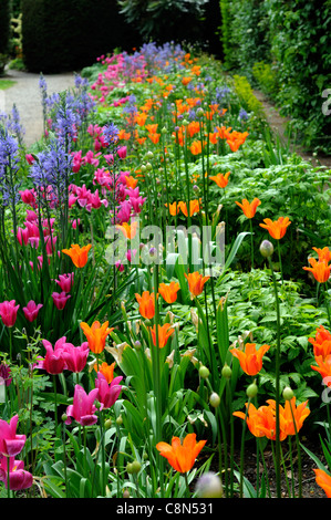 Spring border bed hot colours colors perennial flowering bulbs spring border bed hot colours colors perennial flowering bulbs tulips pink orange blue mixed flower bloom mightylinksfo Gallery