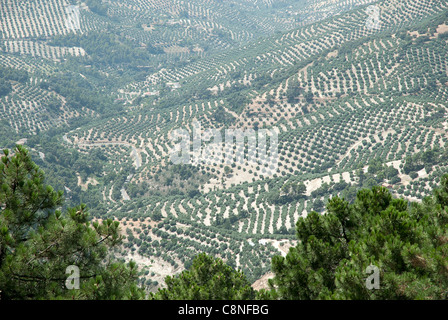 Spain, Andalucia, Jaen Province, Cazorla, Mirador Palomas with views over valley, covered in olive trees - Stock Photo