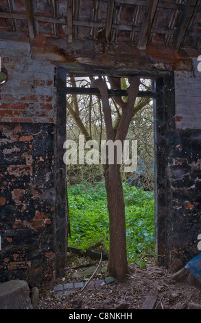 A tree growing in a stable doorway - Stock Photo