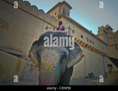 Jaipur the Pink City of Rajasthan Indian Glance Elephant at the Amber Fort in Jaipur around - Stock Photo