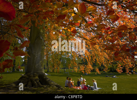 The Tree and its Neighbours, Parc de Bagatelle the Bois de Boulogne A Purple Beech Spring A afternoon - Stock Photo
