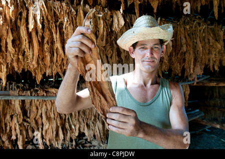 Leaf drying barn on tobacco farm with farmer, Vinales, Cuba - Stock Photo